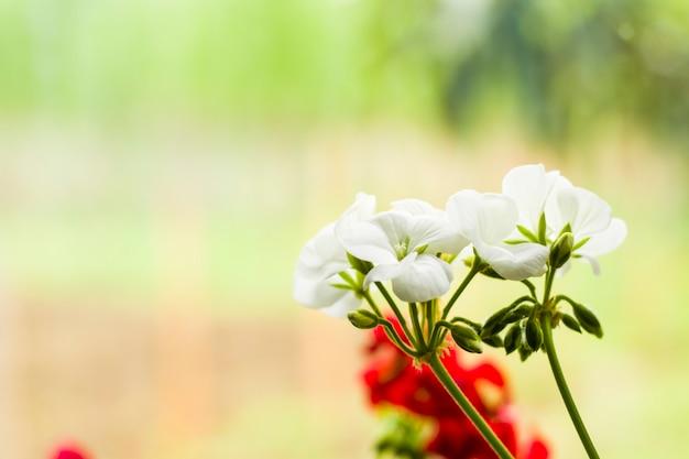 白い花の頭の観葉植物