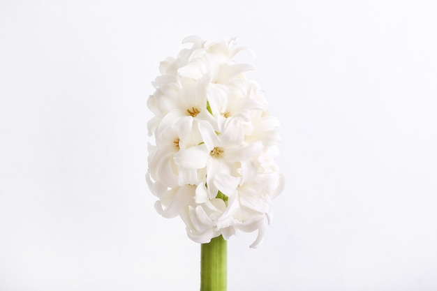 White flower head isolated