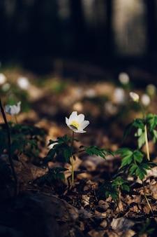 ジャングルの真ん中に白い花