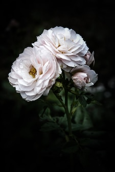 White flower on natural dark.