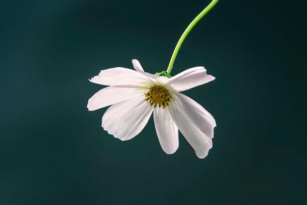 Белый цветок на темно-зеленом фоне