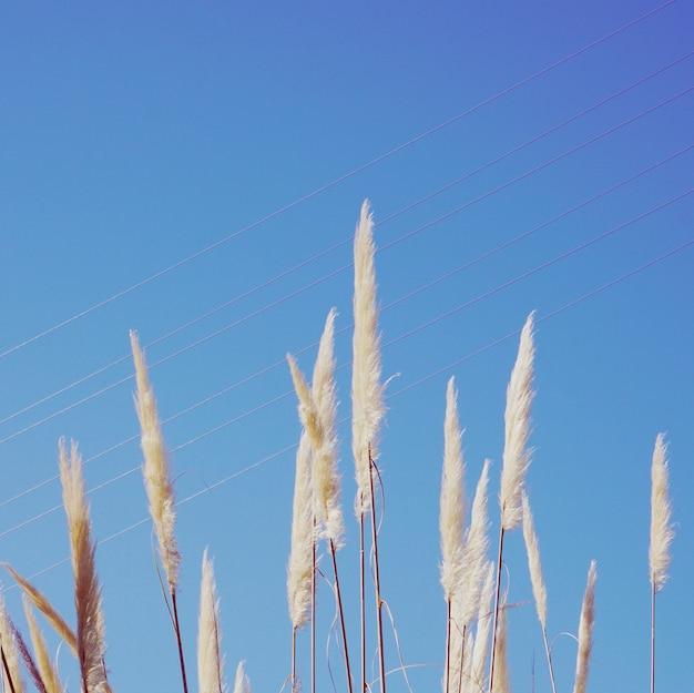 가을 시즌에 자연의 흰 꽃 식물과 푸른 하늘 프리미엄 사진