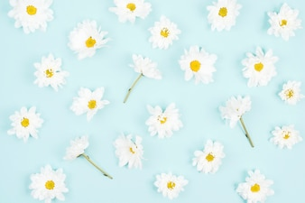 White flower seamless pattern on blue background