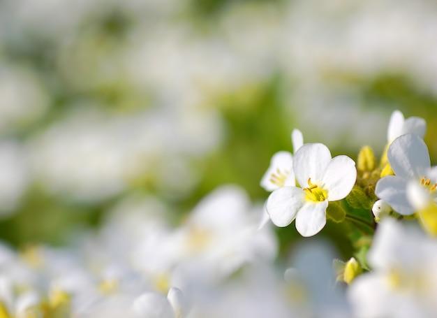 Fiore bianco con sfondo sfocato