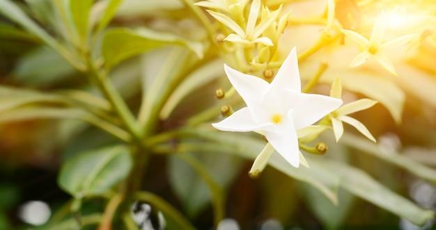 オレンジ色の光と白い花