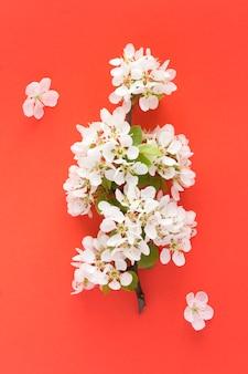 Белые ветви цветущих деревьев на красном фоне. вид сверху. расположение вертикальное.