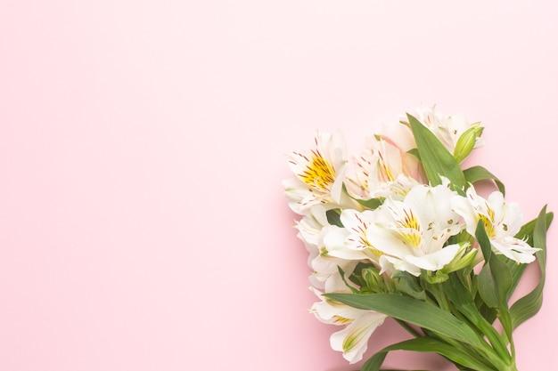 Белые цветы альстромерии на розовом