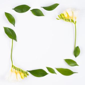 白い花と正方形のフレームの葉