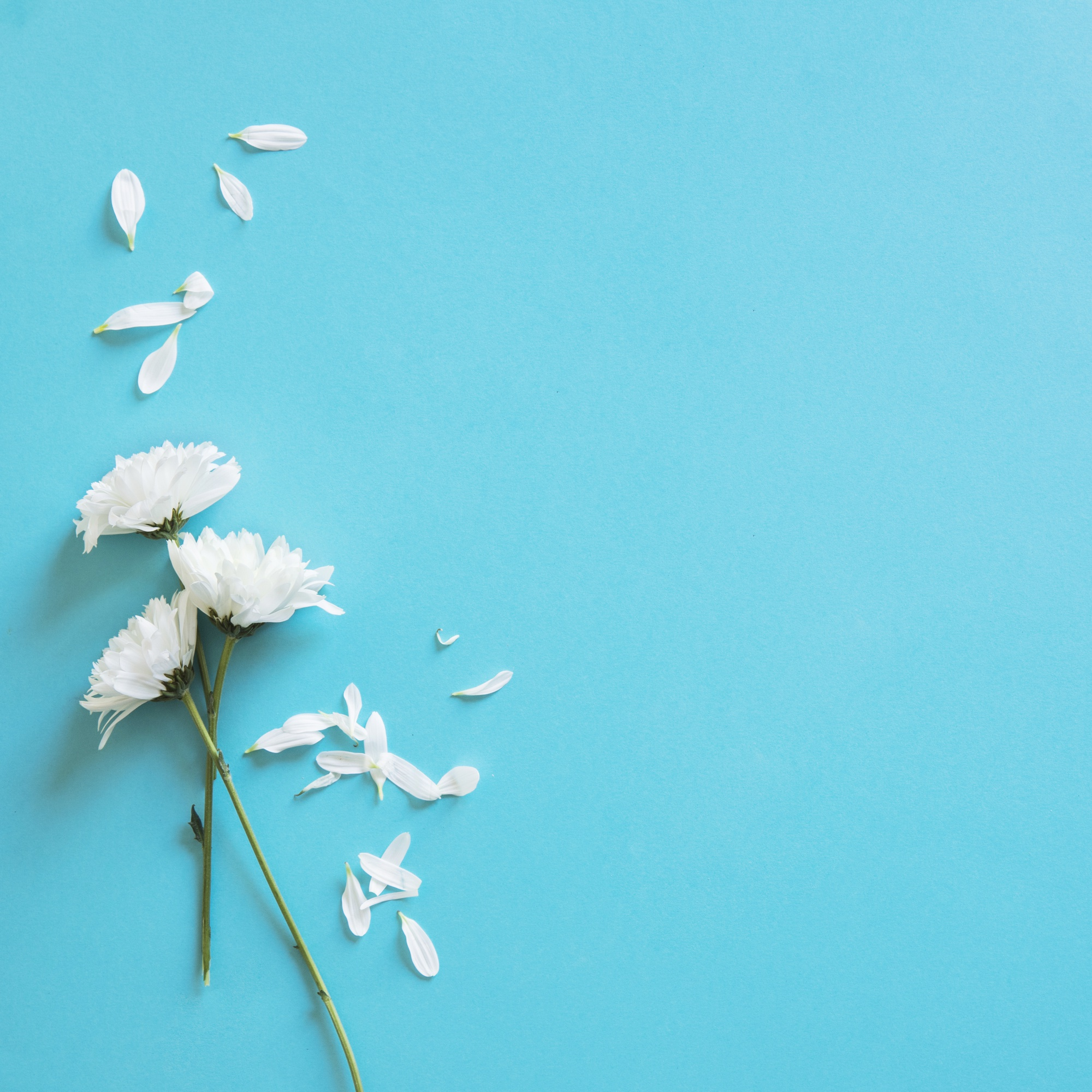 White flowers and petals