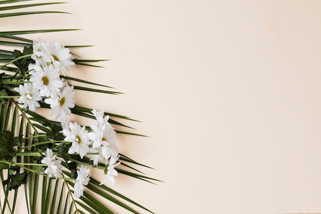 White flowers on beige background