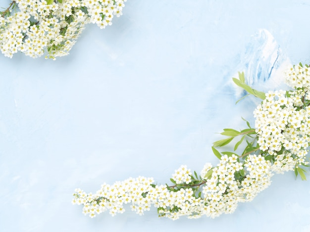 White flowers over blue concrete background. backdrop with copy space