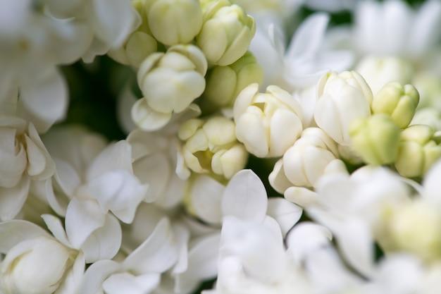 Белые цветы крупным планом на размытом фоне
