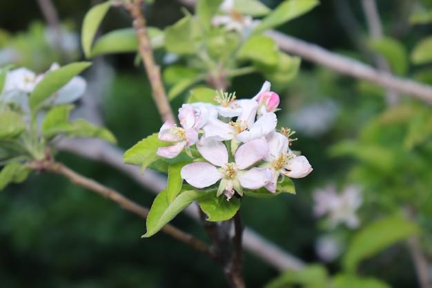 白い花は葉の背景にクローズアップ