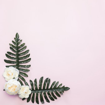 White flowers and green leaves frame composition pink background