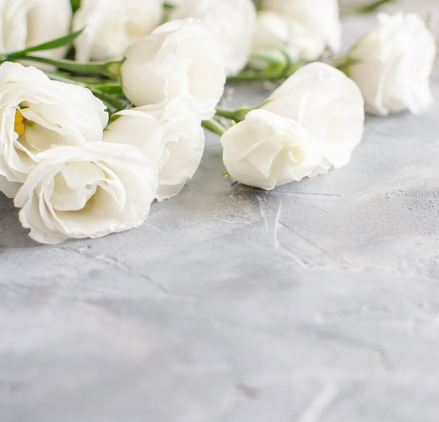White flowers on a grey background close up