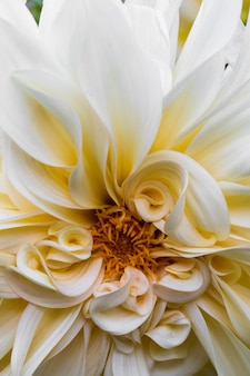 咲く白い花