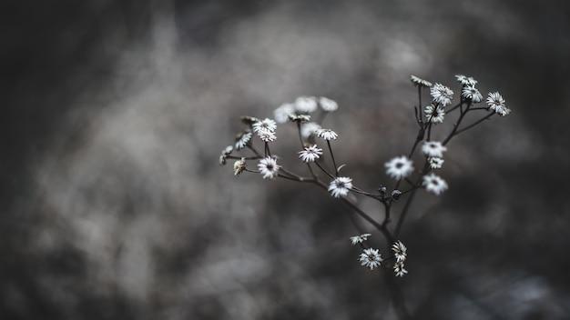 Белые цветы в макросъемке