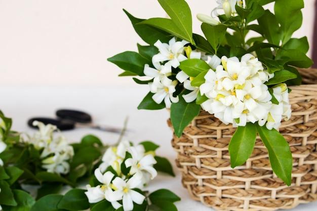 白のバスケットに白い花ジャスミン