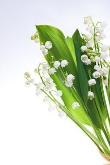 白い背景で隔離の谷の白い花ユリ