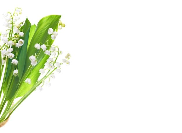Белые цветы ландыши, изолированные на белом фоне