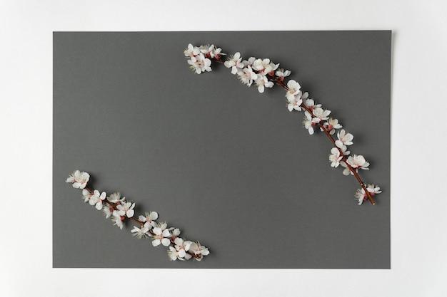 Белые цветы абрикосового дерева на сером фоне. шаблон. фон. макет.