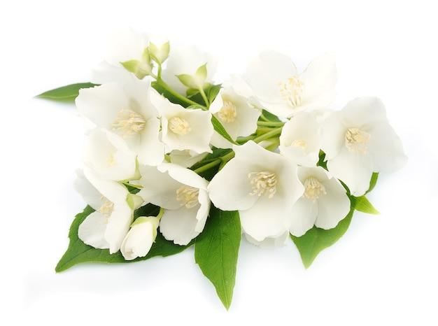 Белые цветы жасмина на белом