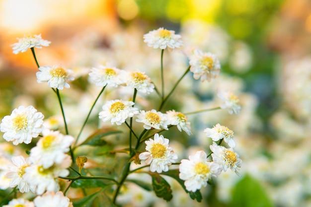 디자인을 위한 초원에서 자연의 배경에 흰색 꽃
