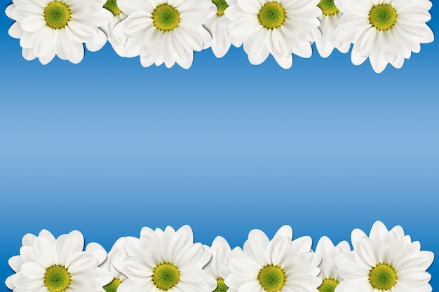 青に白い花