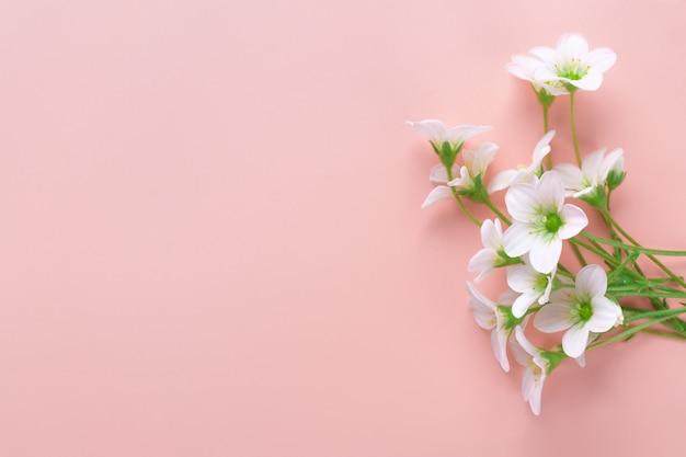 ピンクの背景の白い花