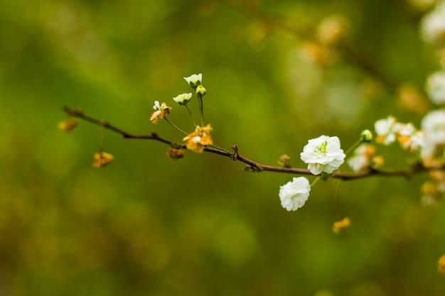 枝に白い花、花のマクロ、春