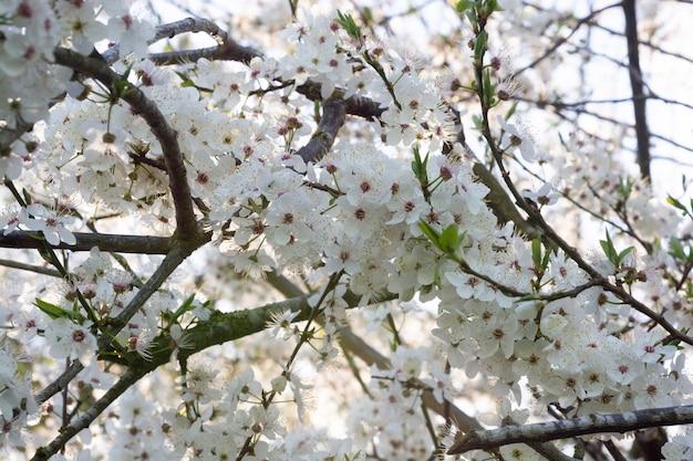木の背景に白い花