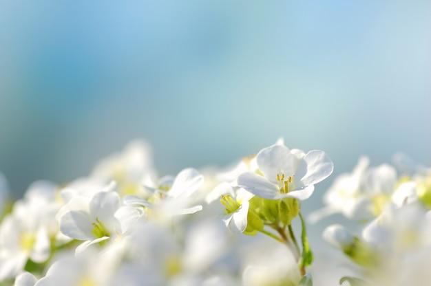 파란색 배경과 흰색 꽃