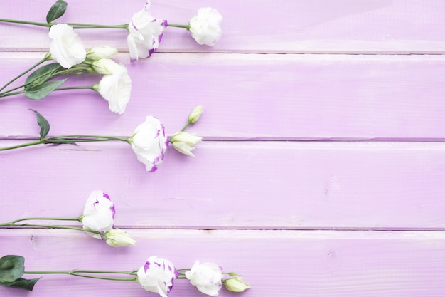 White flowers with bud on pink painted wooden background