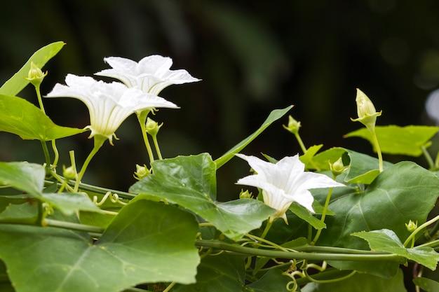 葉の植生と白い花