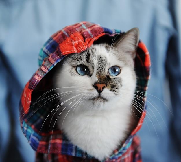 Белый пушистый голубоглазый кот одет в клетчатую рубашку с капюшоном. симпатичный модный стильный близкий портрет на джинсовом фоне. модный образ
