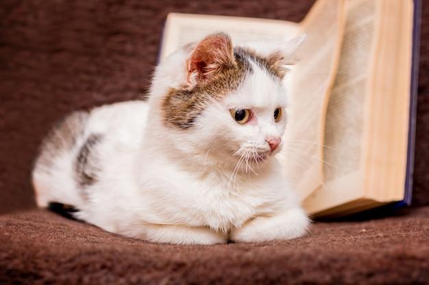 Белый пушистый кот сидит в помещении