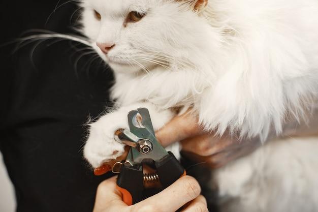 Gatto lanuginoso bianco. veterinario con i gatti. animali sul divano.