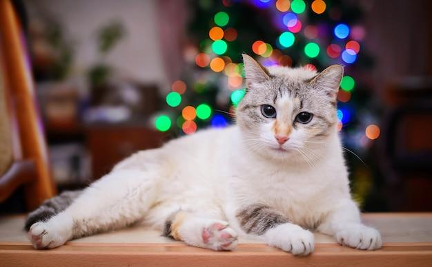 色のライトの背景に青い目をした白いふわふわ猫