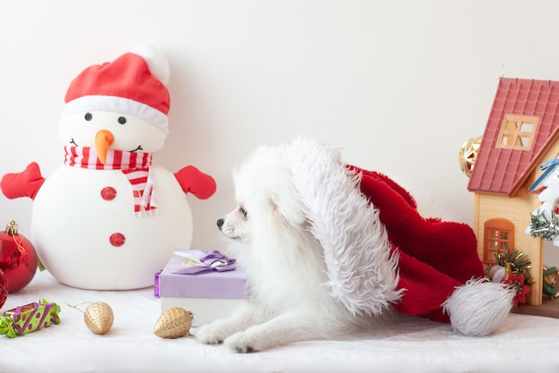 White, fluffy pomeranian, small dog lying sideways to the camera on the head santa hat, new year and christmas concept, santa claus elf