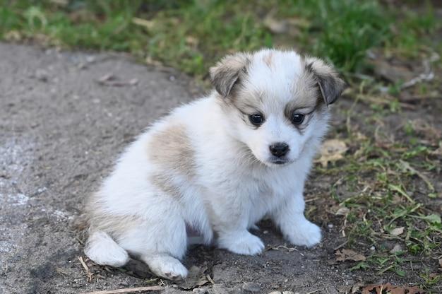 Белый пушистый щенок с пятнами щенка гуляет по траве.