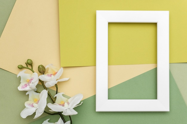 White frame and branch of orchid flower on geometric green shades paper background.