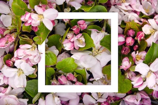 花の背景に白いフレーム。春の花のボーダー、ピンクと白の花、緑のリンゴの木の葉、トップビュー。春の花のコンセプト、フラットレイアウト