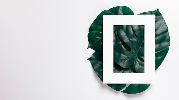 コピースペースを持つ緑の葉に白いフレーム