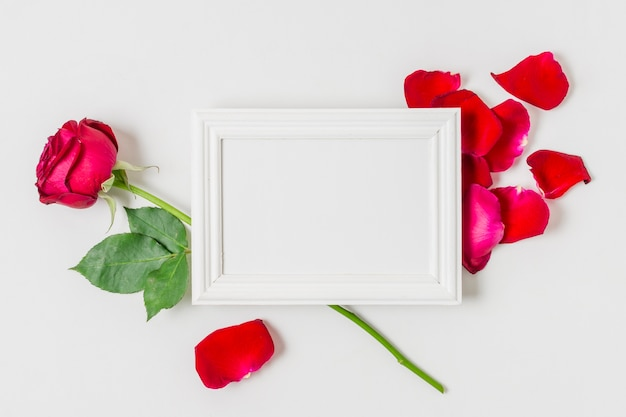 White frame surrounded by red roses