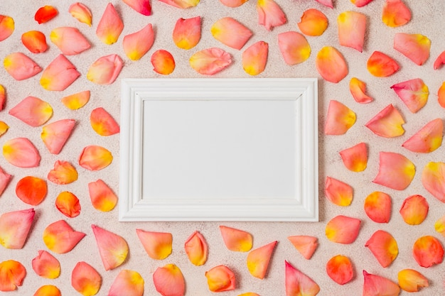 White frame surrounded by rose petals