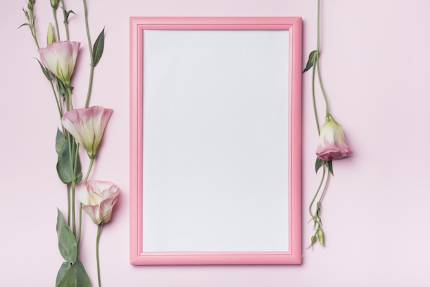 Белая рамка с цветами eustoma на розовом фоне