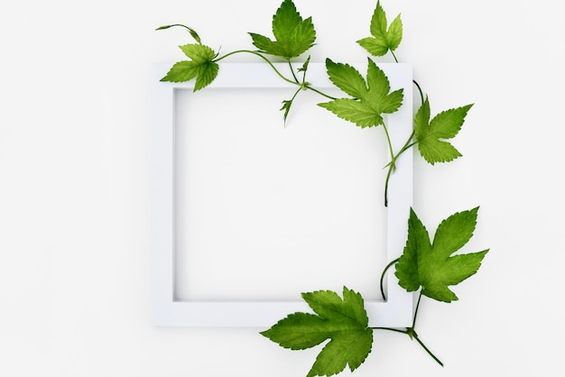 White frame with hops and leaves