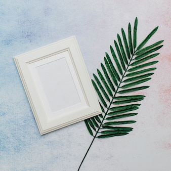 White frame with palm tree leaf