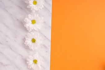 White frame with rows of daisy flowers on orange backdrop