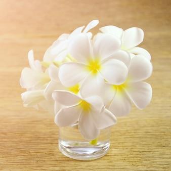 White frangipani flowers with warm light tone.